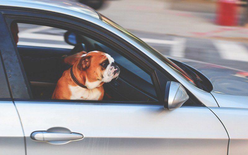 viaggiare insieme al proprio cane_800x533